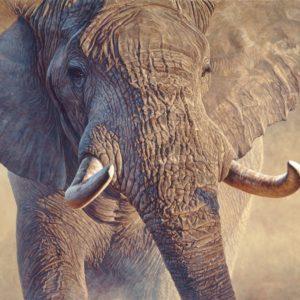 John Banovich-Big Ivory