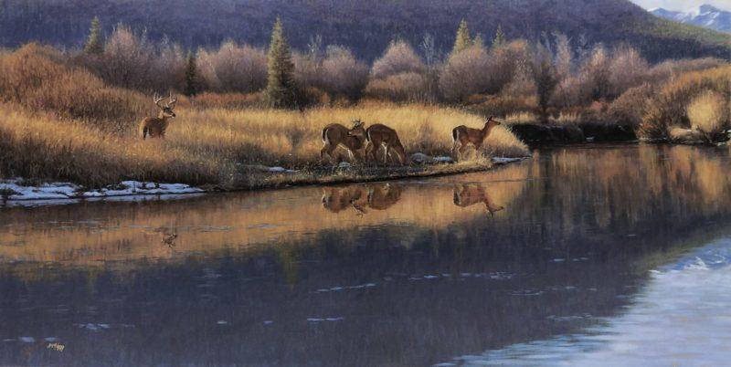 John Banovich-Reflections of Gold