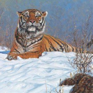 John Banovich-Siberian Tiger