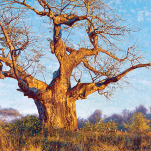 John Banovich-Under the Baobab