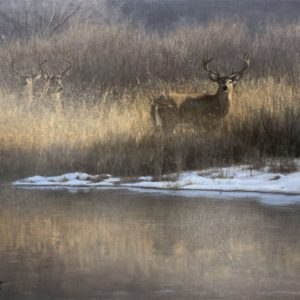 John Banovich-Winter Whitetail