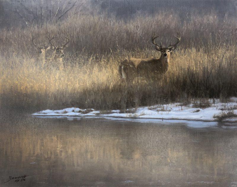 John Banovich-Winter Whitetail