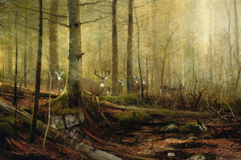 Michael Coleman-Eyes of the Forest Whitetail Deer