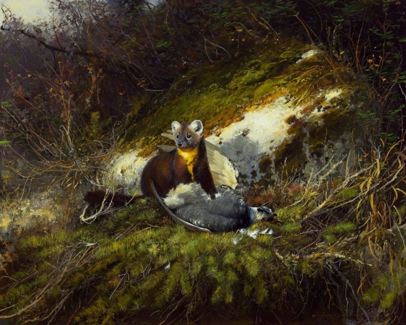 Michael Coleman-In the Northwoods Pine Martin