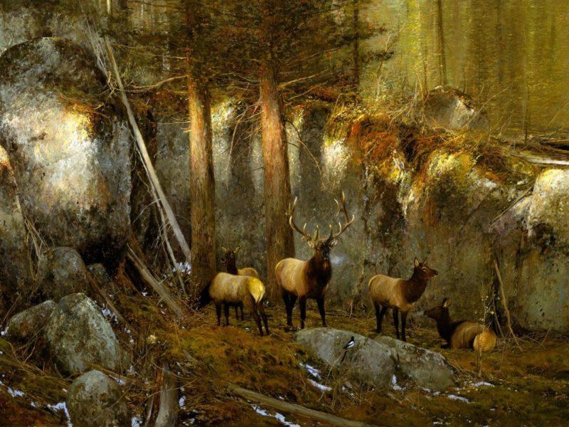 Michael Coleman-In the Shadows Elk