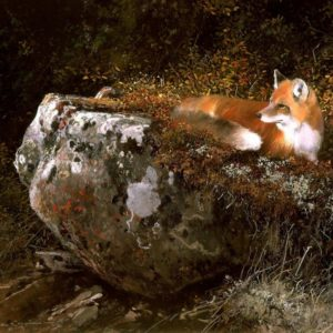 Michael Coleman-Morning Sun Red Fox