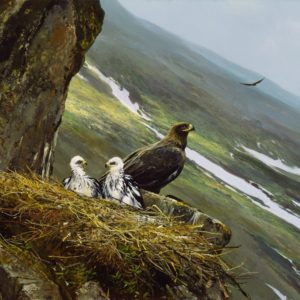 Michael Coleman-Regal View Golden Eagle