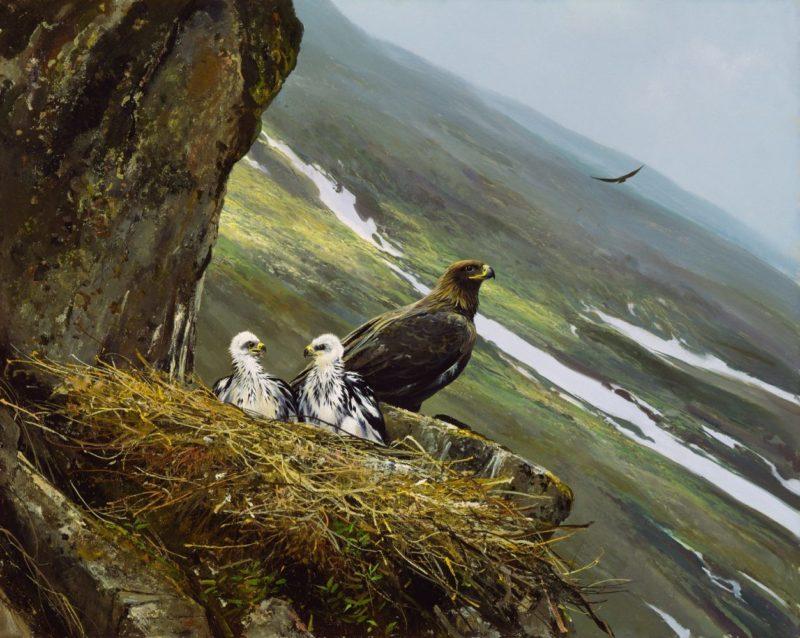 Michael Coleman-Regal View Golden Eagle