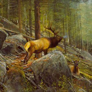 Michael Coleman-The Monarch Bull Elk