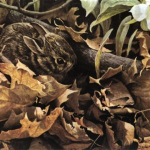 Robert Bateman-Among the Leaves