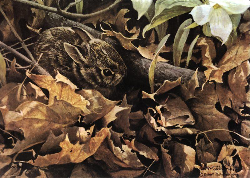 Robert Bateman-Among the Leaves