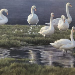 Robert Bateman-Bank of Swans