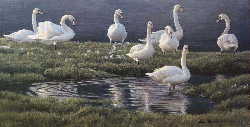Robert Bateman-Bank of Swans