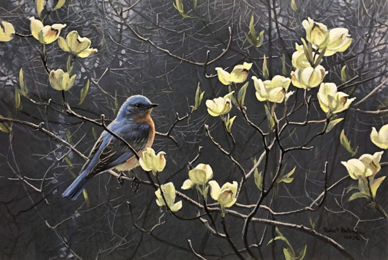 Robert Bateman-Bluebird and Blossoms