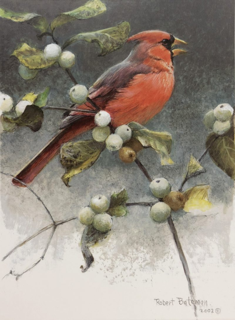Robert Bateman-Cardinal and Snowberries