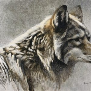 Robert Bateman-Coyote Head Study