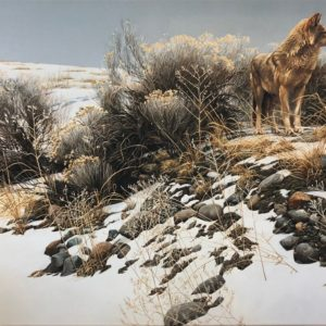 Robert Bateman-Coyote in Winter Sage