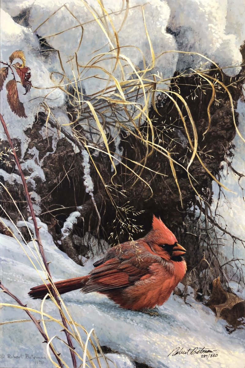 Robert Bateman-Winter Cardinal