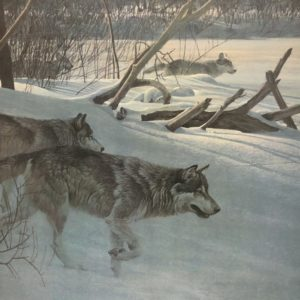 Robert Bateman-Wolfpack in Moonlight