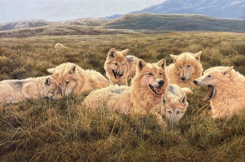 Tundra Family Arctic Wolves