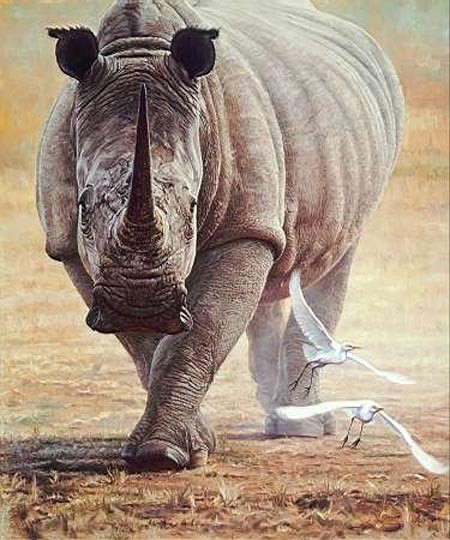 john banovich-great white rhino
