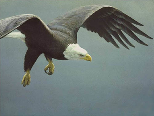 Robert Bateman-approach bald eagle