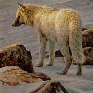 Robert Bateman-arctic evening white wolf