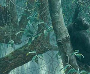 Robert Bateman-at mahale chimpanzees