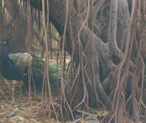 Robert Bateman-banyan walk peacock