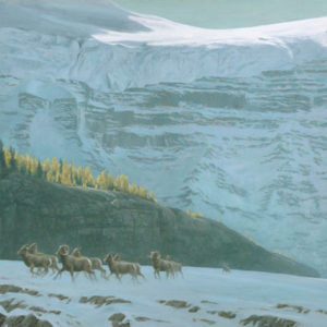 Robert Bateman-bighorn sheep herd