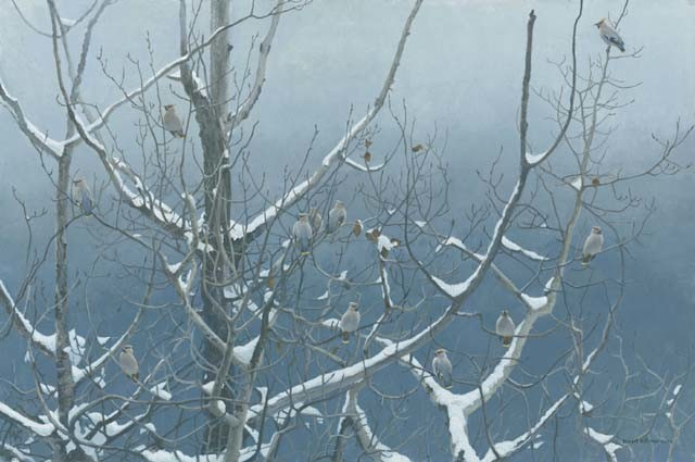 Robert Bateman-bohemian waxwings and poplar
