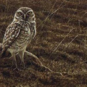 Robert Bateman-burrowing owl