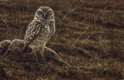 Robert Bateman-burrowing owl