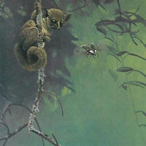 Robert Bateman-bush baby and beetle