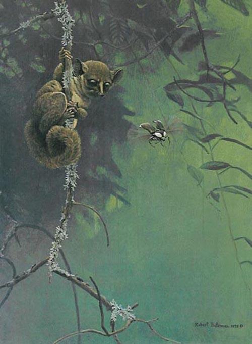 Robert Bateman-bush baby and beetle