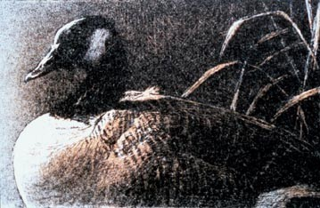 Robert Bateman-canada goose