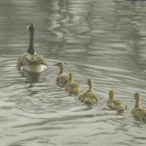 Robert Bateman-canada goose and goslings