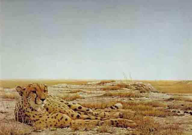 Robert Bateman-cheetah siesta