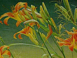 Robert Bateman-daylilies and dragonflies