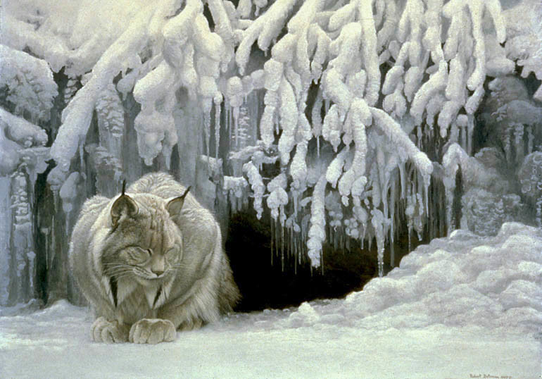 Robert Bateman-dozing lynx