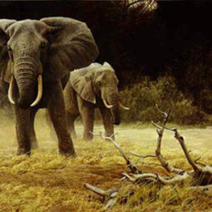 Robert Bateman-elephant cow and calf