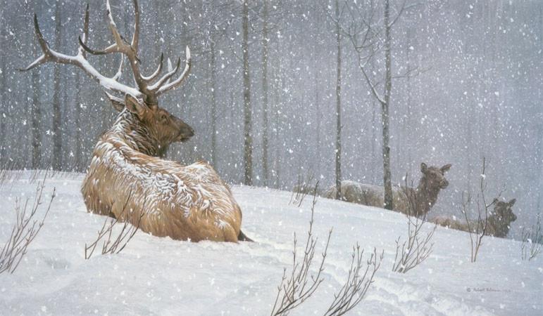Robert Bateman-evening snowfall american elk