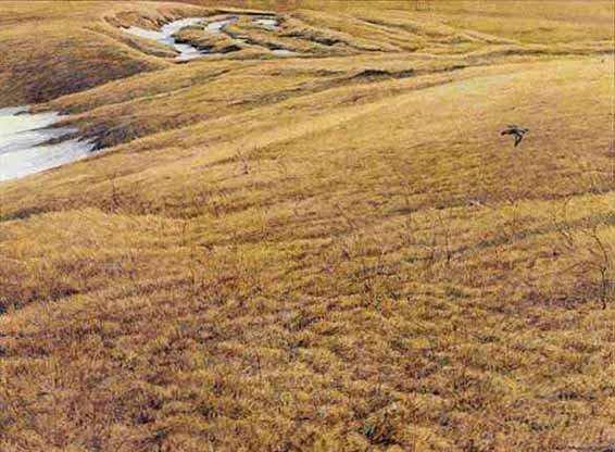 Robert Bateman-first arrival killdeer
