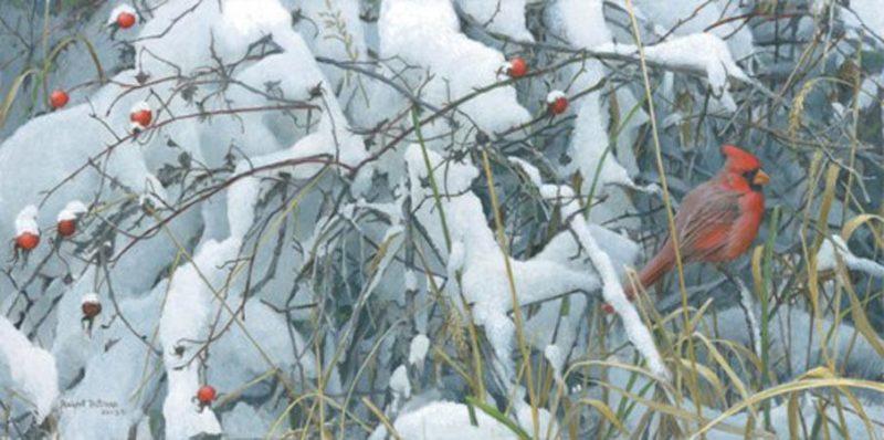 Robert Bateman-fresh snow cardinal