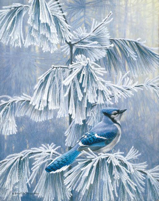 Robert Bateman-frosty morning blue jay