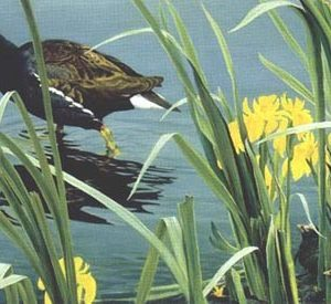 Robert Bateman-gallinule family