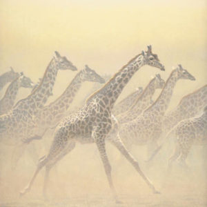 Robert Bateman-galloping herd girrafes