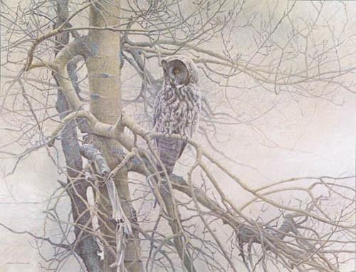 Robert Bateman-ghost of the north great gray owl