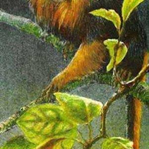 Robert Bateman-golden headed lion tamarin