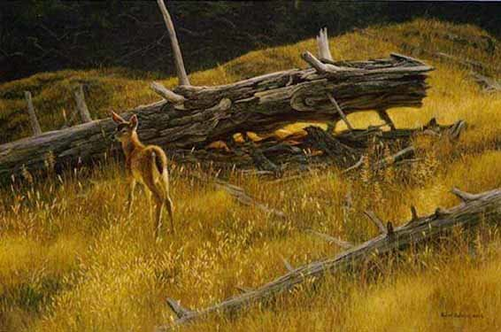Robert Bateman-golden light black tailed fawn